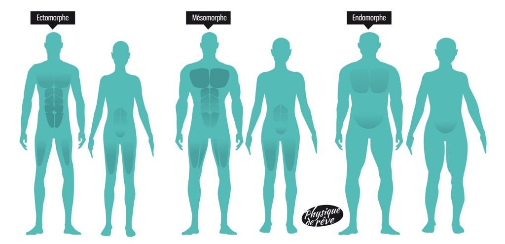 type de corps musculation